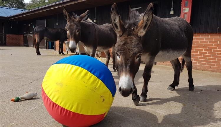 The Donkey Sanctuary Manchester Summer Open Day - Visit Manchester