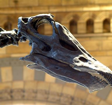 Dippy On Tour events in Rochdale