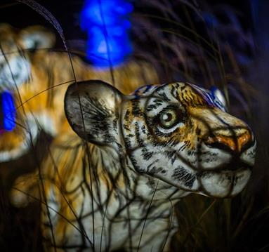 The Lanterns at Chester Zoo this Christmas