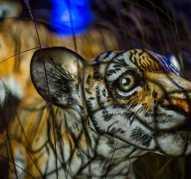 Thumbnail for The Lanterns at Chester Zoo