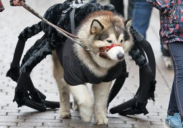The Spooky Pooch Costume Show