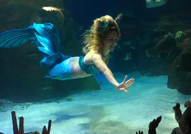 Meet the Mermaids @ SEA LIFE Manchester