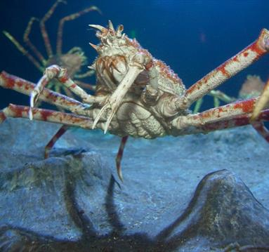 Enter the Lair of the Giant Crab at Sea Life Manchester