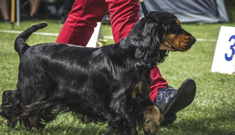Bark in the Park fun dog show