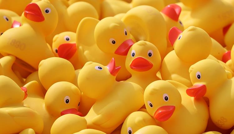 Diggle Duck Race
